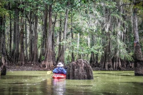 Sparkleberry Swamp with LCU-111