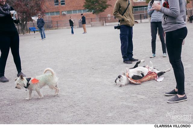 Shaw Dog Park