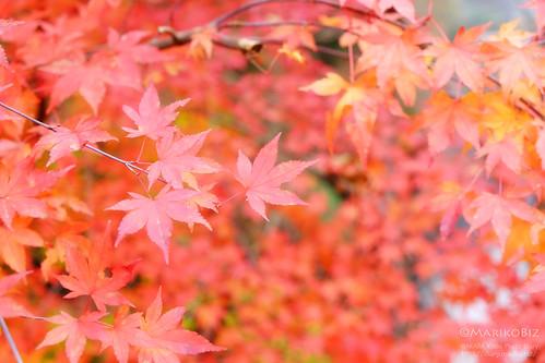 鎌北湖 20151210-DSCF8977_1