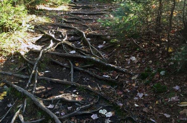 Hancock Notch Trail Roots