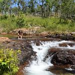 04 Viajefilos en Australia, Litchfield NP 006