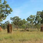 02 Viajefilos en Australia, Kakadu NP 128