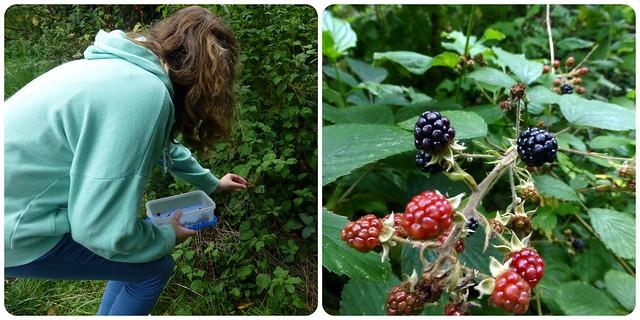 Blackberry picking!