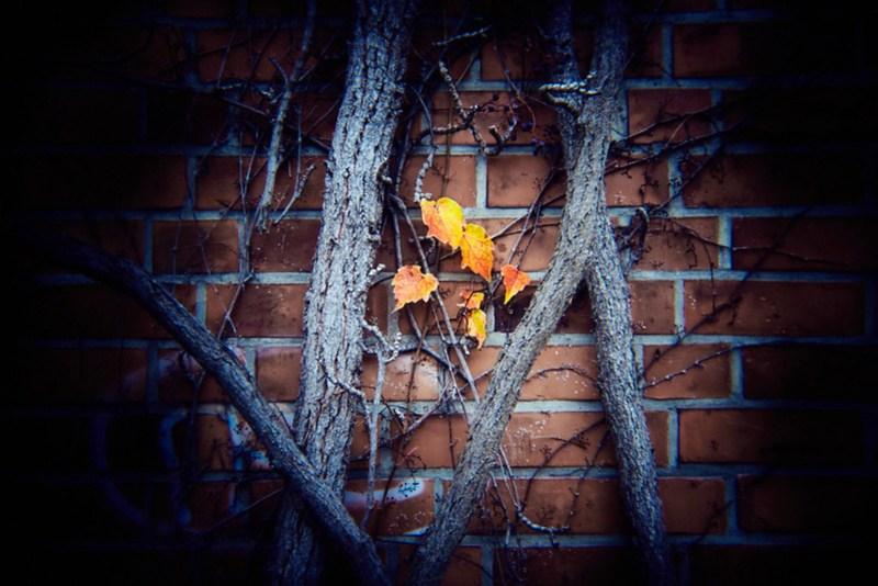 Einsame Blätter
