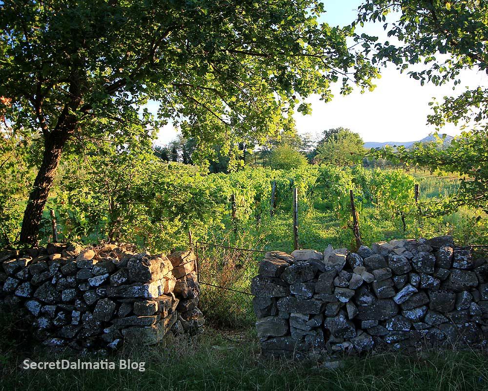 The wine yard