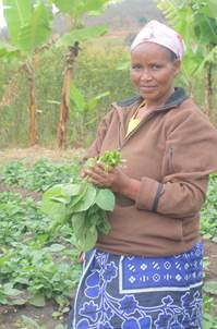 A female farmer in Sunya village located in the Manyara region holds a bundle of African nightshade harvested from the demonstration plots. African nightshade is rich in Vitamin A and micronutrients and has the potential to replace crops like Chinese cabb