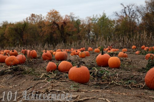 Reilly's Pumpkin Patch