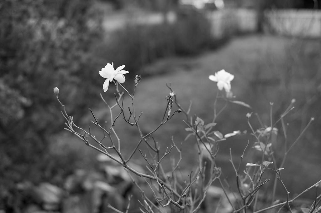 Die Blüte im Winter