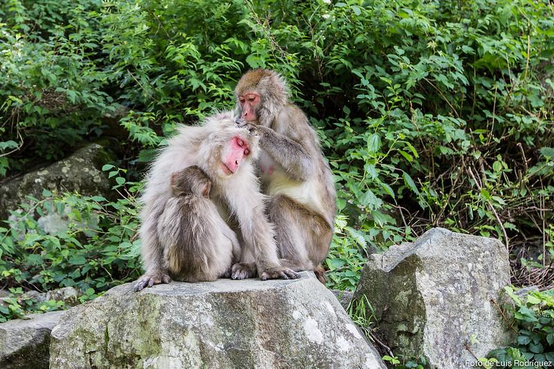 Excursión a Jigokudani-122