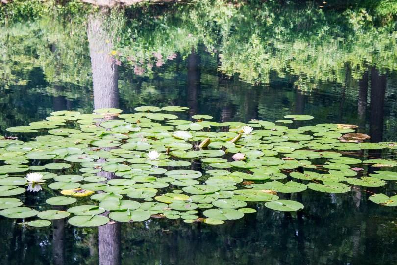 mt-cuba-gardens-delaware-lilypads