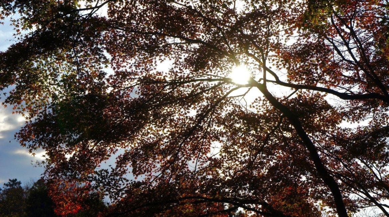 Rikugien Autumn Colors