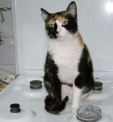 kyra, pisica