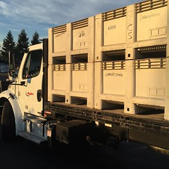 #Syrah for Corallina #Rosé arrives at Cornerstone #NapaHarvest #harvest2015