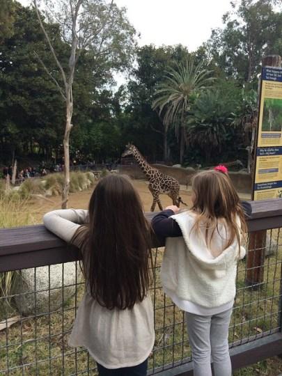 seeing giraffes