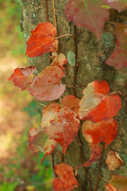 それぞれの秋