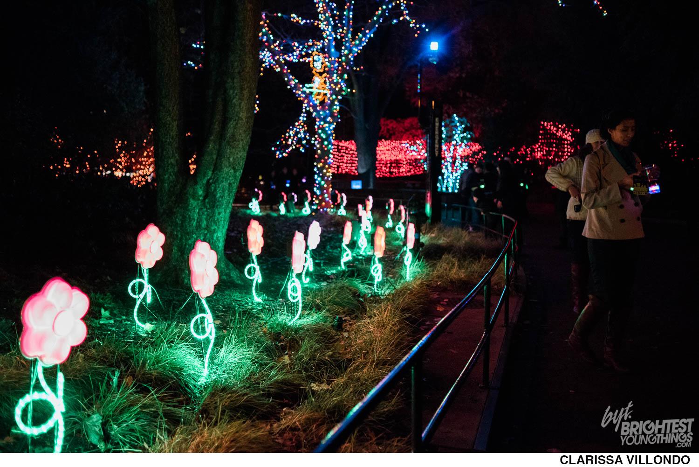 Zoo Lights Dc 2017