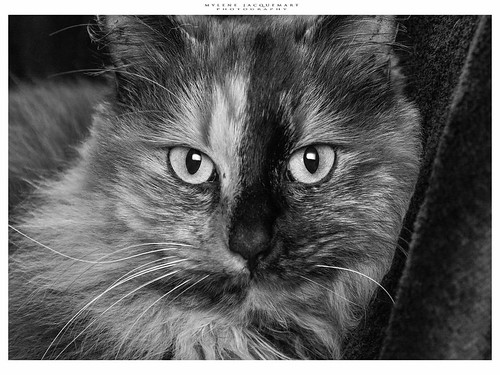 #cat #spooky