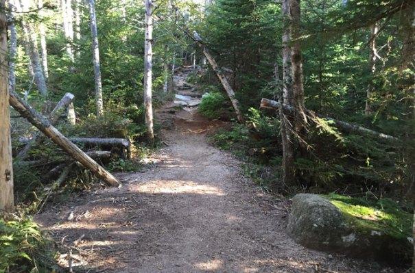 Osceola Trail Beginning