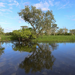 02 Viajefilos en Australia, Kakadu NP 062