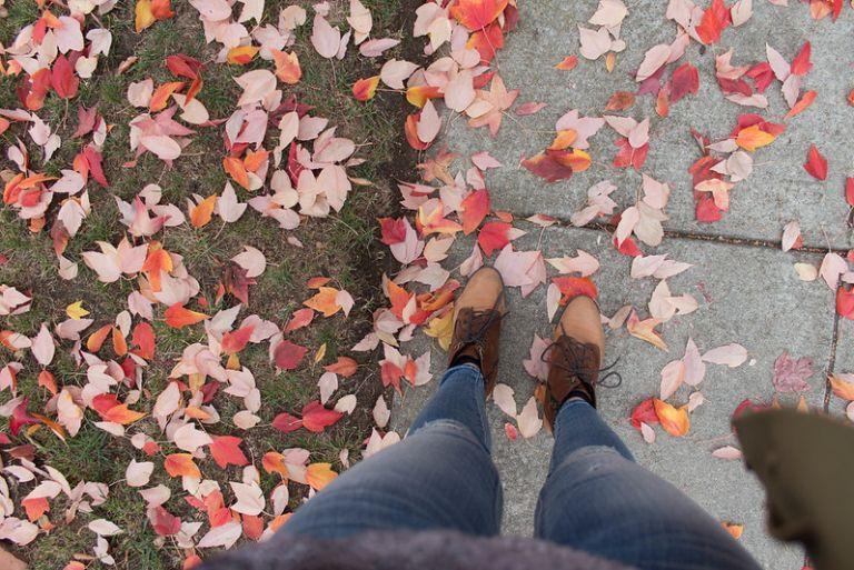 11.08. Mountain View fall