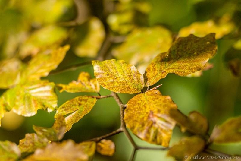 Herfstbladeren-6617