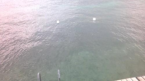 Uno que llega nadando y Ginebra desde el lago