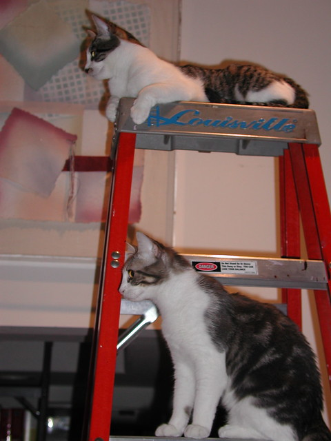 Cleo and Pope on a ladder