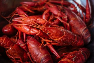 Shortly cooked crayfish