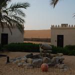 Viajefilos en el desierto de Abu Dhabi 06