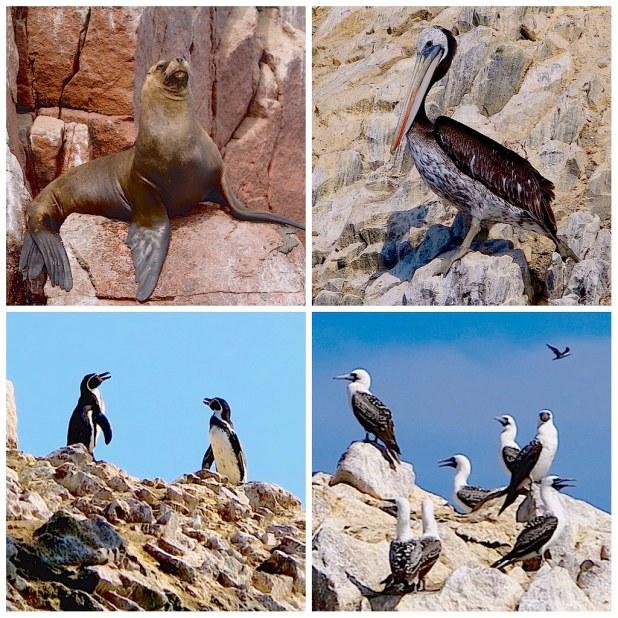 Fauna en Islas Ballestas