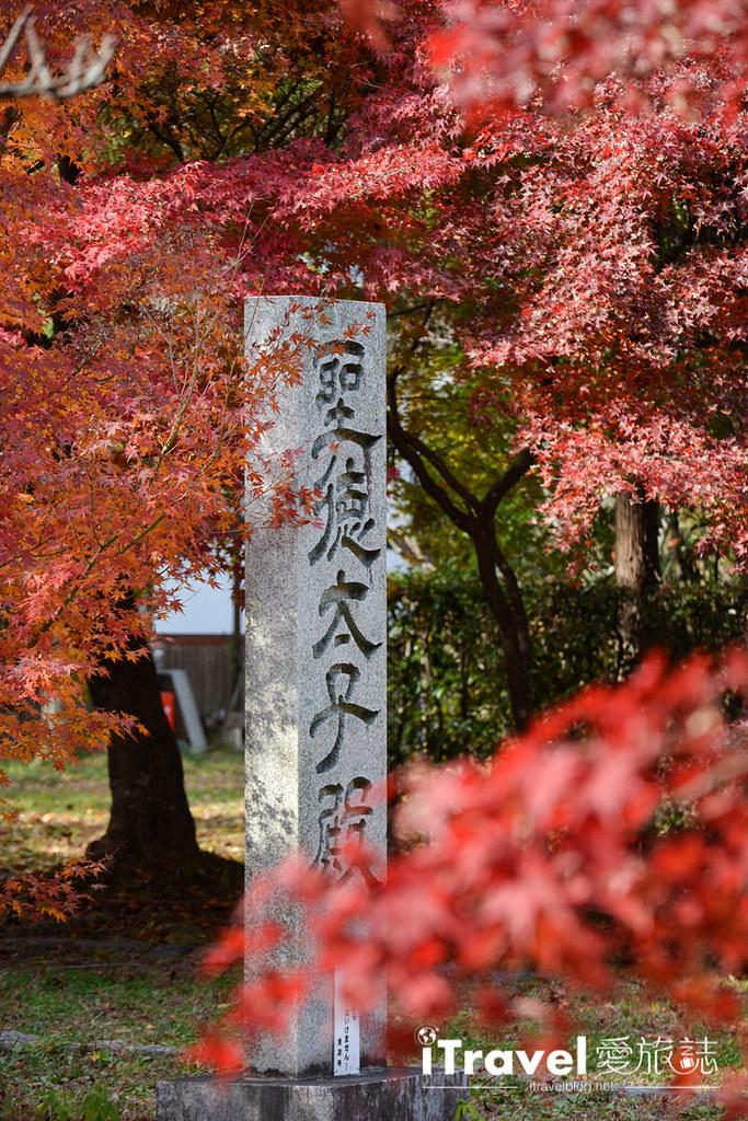 《京都赏枫景点》清凉寺:提供茶屋休憩赏枫的无料红叶景点