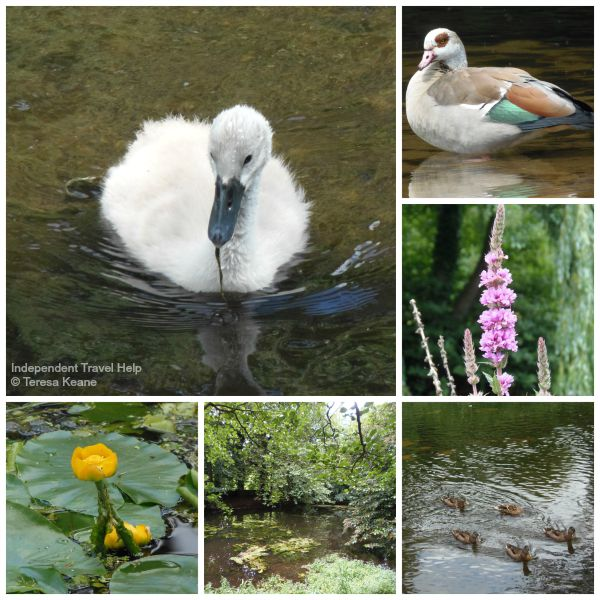Nunnery Lakes and Nature Reserve, Thetford