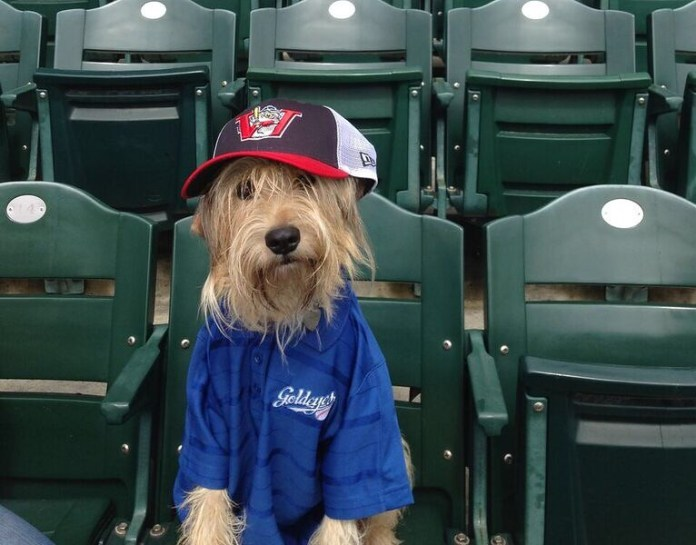 Bring Your Dog to a Goldeyes Game When Bark in the Park Returns on June 17