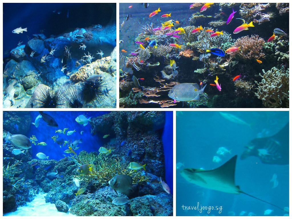 travel.joogo.sg - SEA Aquarium 12