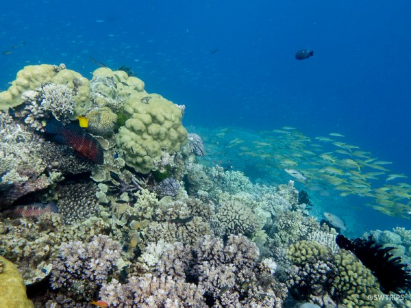 Corals, Great Barrier Reef
