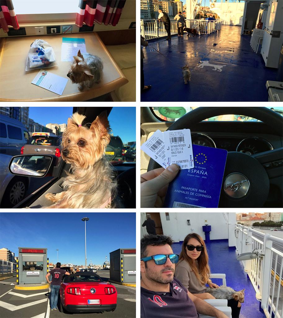 Viajar con mascotas a Reino Unido: Llevar mascotas a Reino Unido Viajar con mascotas a Reino Unido Viajar con mascotas a Reino Unido desde España 23550816552 f07481f707 b