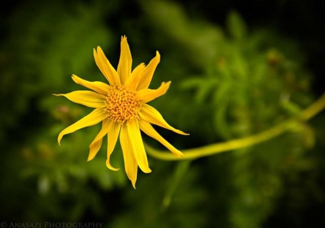 Trail Flower
