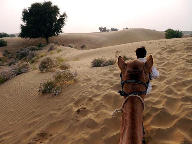 Camel Safari in the Thar Desert