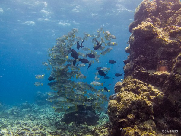 School of Fish, Great Barrier Reef