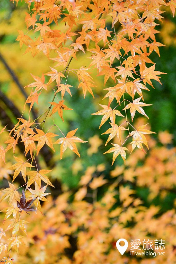 京都賞楓景點 琉璃光院 09