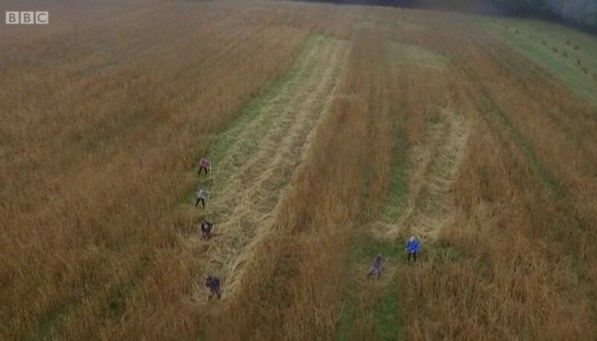 Scythe wheat harvest on Countryfile