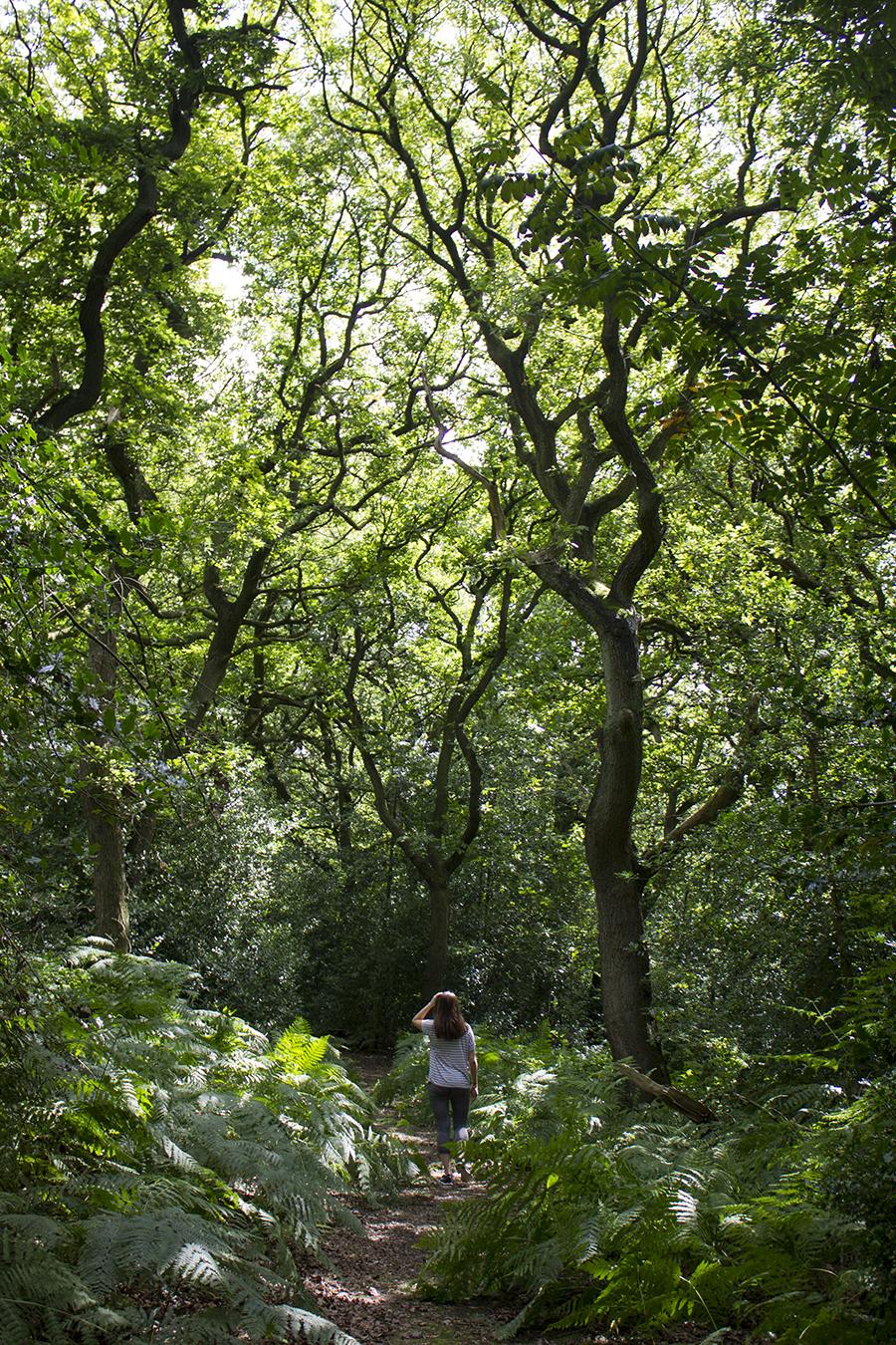 walk-in-woods-moddershall-oaks