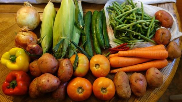 Homestead Creamery Week 20 Vegetable Delivery