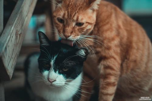 聽說他們是兄弟,兄弟倆都吃的超大扣的。