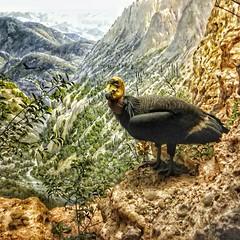El Condor pasa 😂