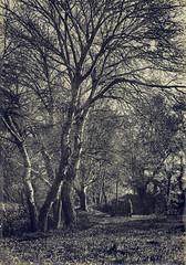 Aix en Provence - 1904