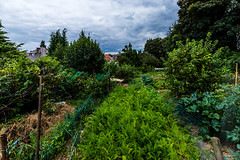 20190714 Potagers Urbains #02 Paradisiers