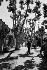 Porto Garibaldi - street scene