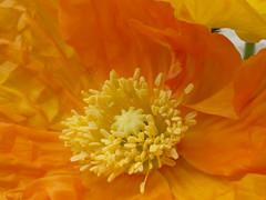 Natuur, bloemen.000