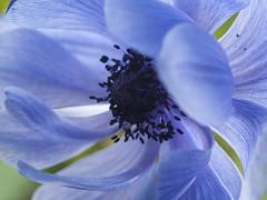 Natuur, bloemen.004